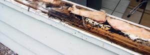 избавиться от муравьев в бревенчатой бане