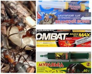 Борьба с муравьями в бане народными способами