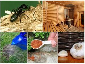Борьба с муравьями в бане химическими способами