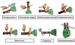 Сроки заготовки веников