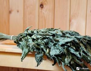 Как правильно заготовить крапивный веник